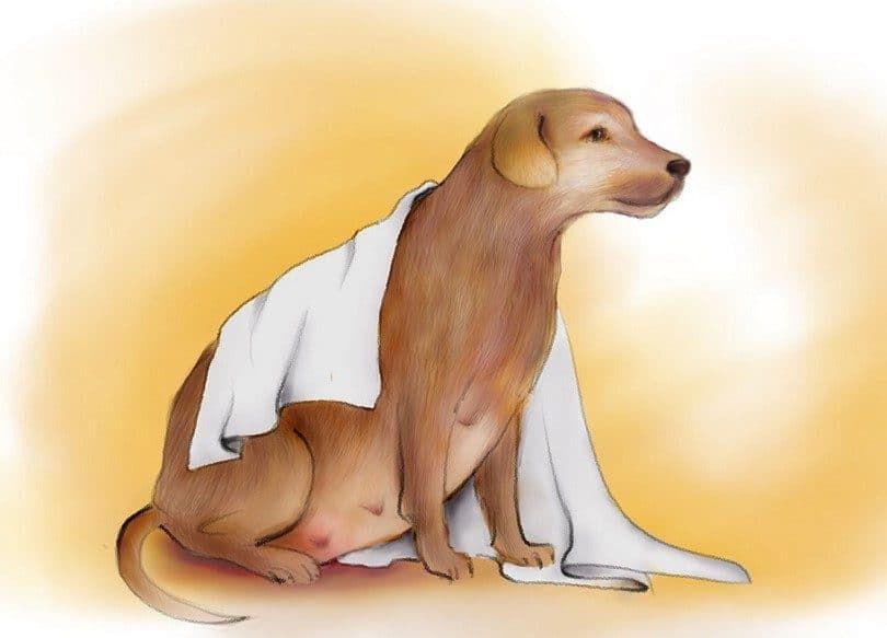 Preparar una guardería para perros embarazada