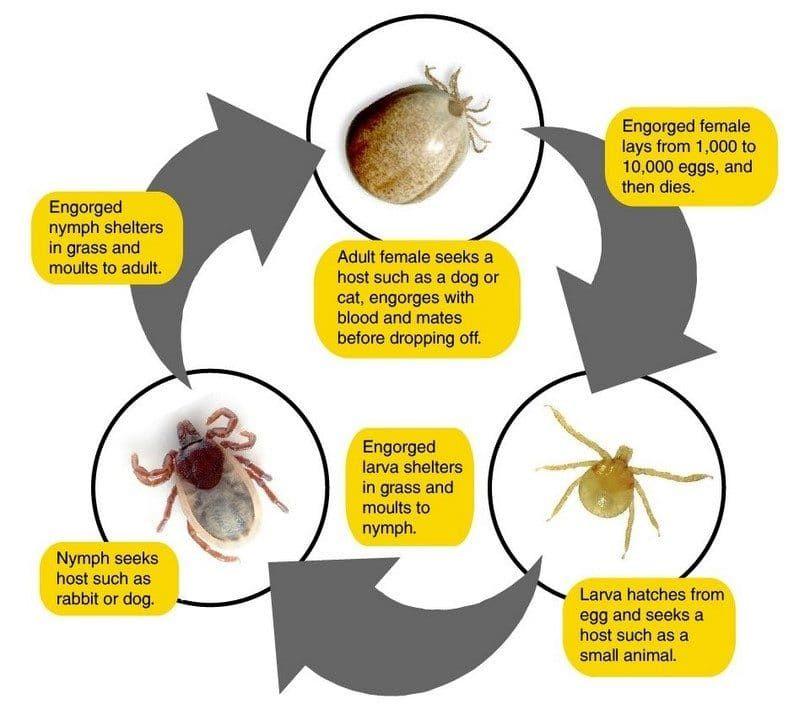 Tenga cuidado con las plagas