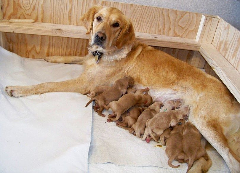 Mantenga la madre y los cachorros juntos