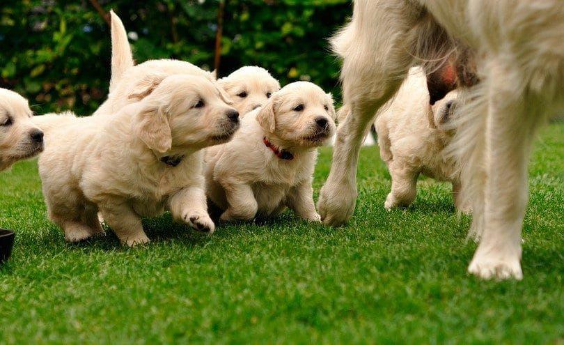 perro mamá y cachorros