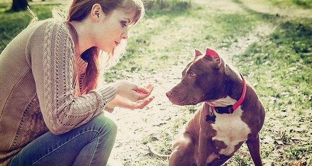 CГіmo cuidar a su perro pit bull
