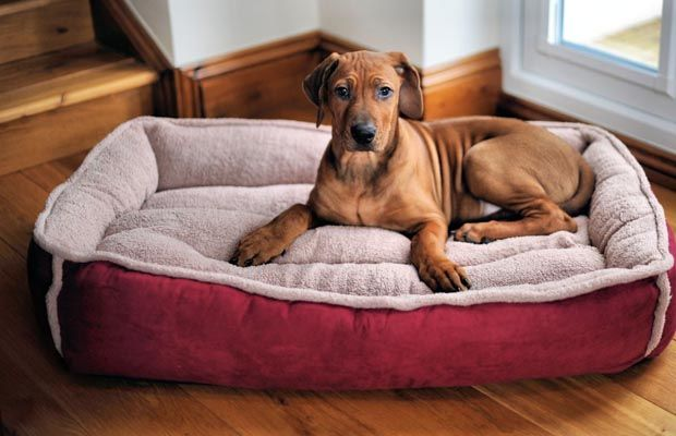 Cómo elegir la mejor cama del animal doméstico para su perro