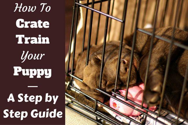 Cómo tren del cajón un cachorro: día, noche, incluso si usted trabaja