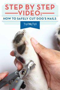 CГіmo cortar las uГ±as del perro de forma segura