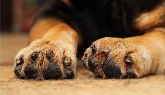 Cómo cortar las uñas de los perros: una guía sobre un proceso delicado