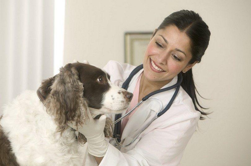 El examen veterinario del perro