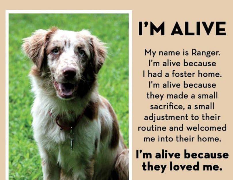 Soy perro vivo