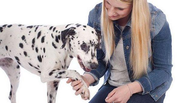 CГіmo conseguir un perro a confiar en usted