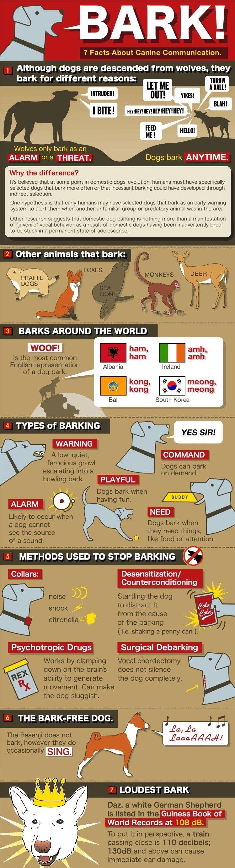 infografía ladrido de un perro