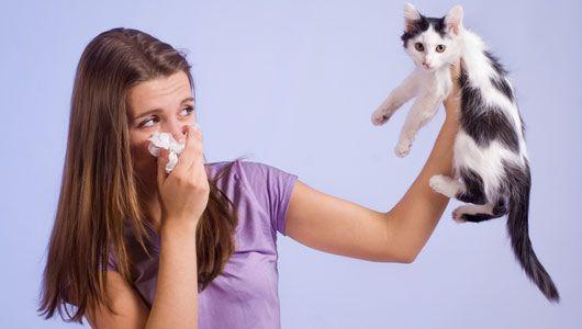 ¿Cómo deshacerse de la caspa de gato en casa, alfombras, muebles con spray, champú y toallitas