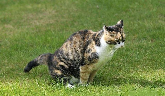 ¿Cómo deshacerse del olor a orina de gato en la alfombra, en casa, fuera, en concreto, la ropa y en el coche