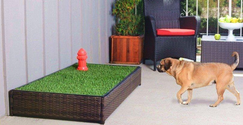 Cómo entrenar a un perro albergar: técnicas a aplicar para cachorros y adultos
