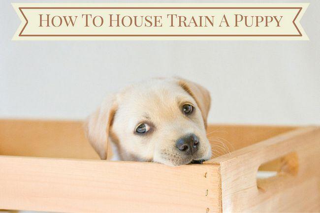 cachorro de labrador en caja con la forma de la casa de entrenar a un cachorro en un banner de arriba