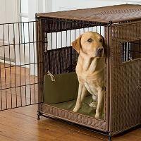 Un cachorro de Labrador en una caja elegante