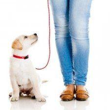 cachorro de laboratorio en el correo en el fondo blanco con un par de jeans patas