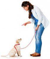 Una mujer que entrena a un Labrador