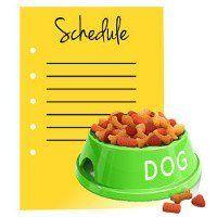cuenco del perro verde de alimentos al lado de un calendario en blanco amarillo