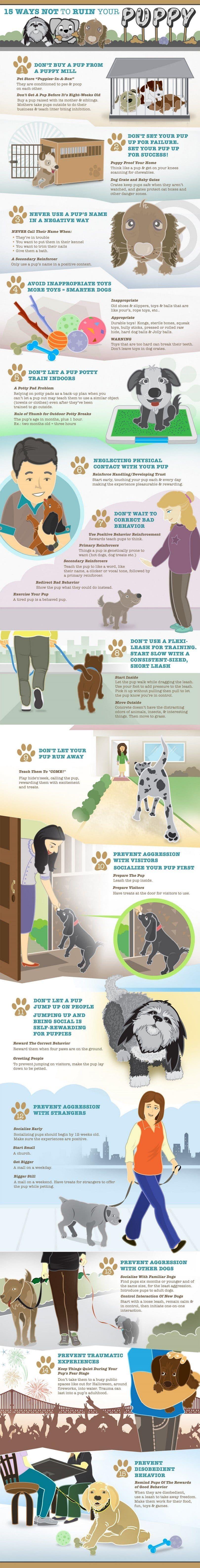 Cachorro infografía formación