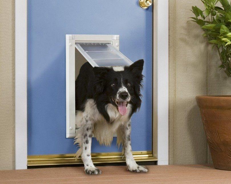 Endura medio de la puerta para el perro