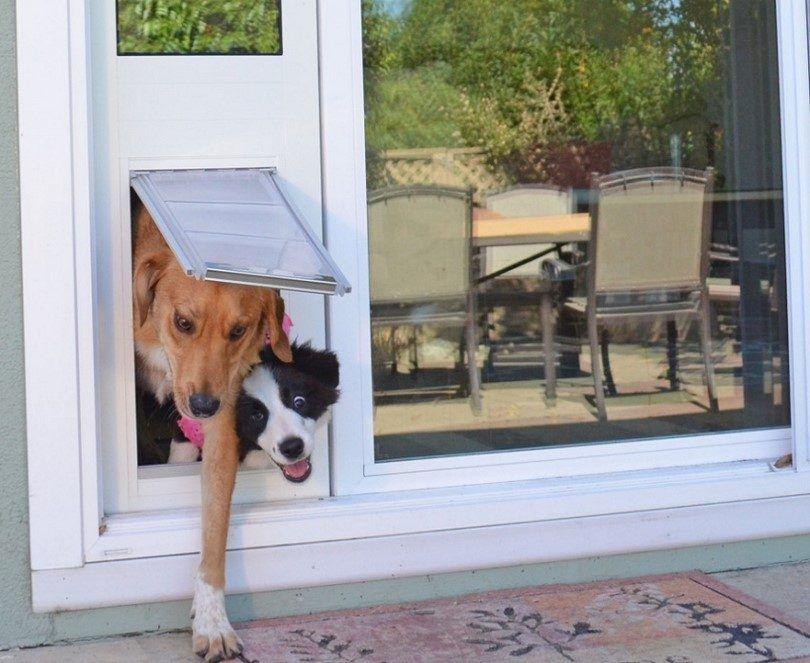 Perrito puerta