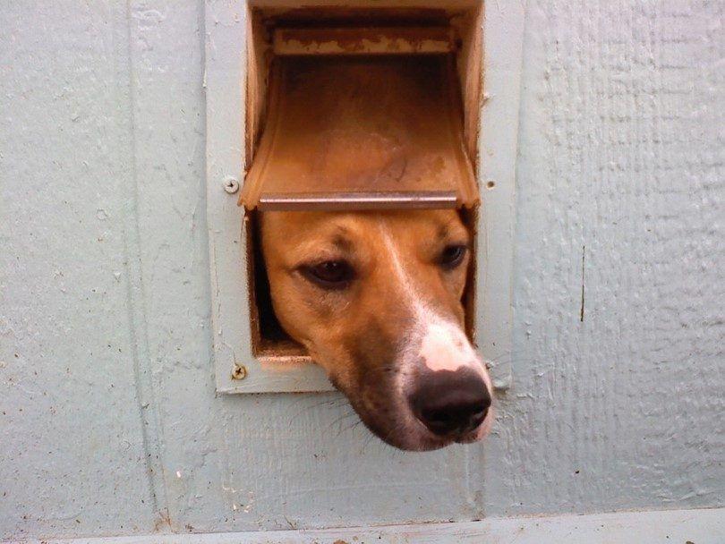 puerta del perrito demasiado pequeГ±a