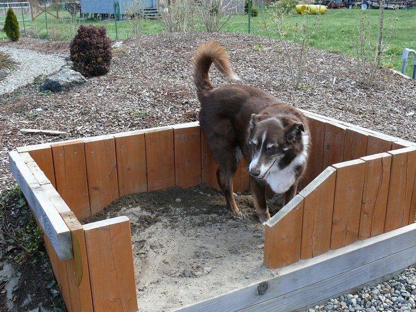 pozo de perrito con la cerca