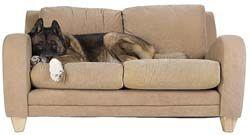 Cómo mantener a los perros fuera de los muebles GRATIS 1