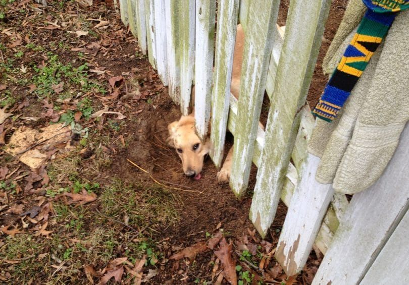 Excavar bajo la cerca