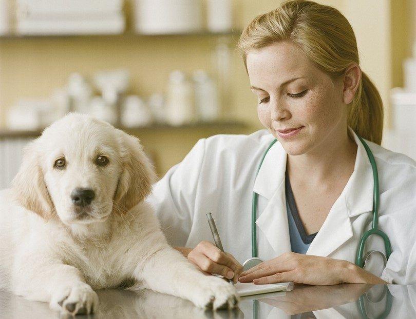 Cómo mantener su perro sano: 8 factores importantes
