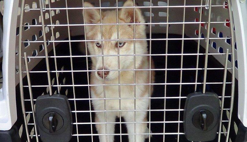 Cómo entrenar a un cachorro de la perrera: métodos y trucos para la introducción de fido a su propio lugar