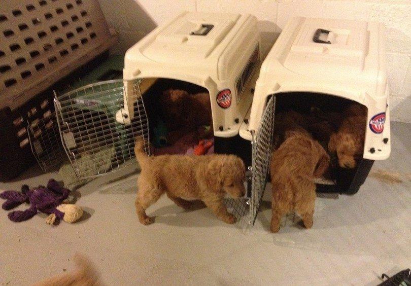 entrenamiento cachorros