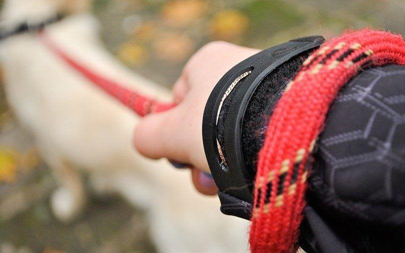 el perro se dan`s leash