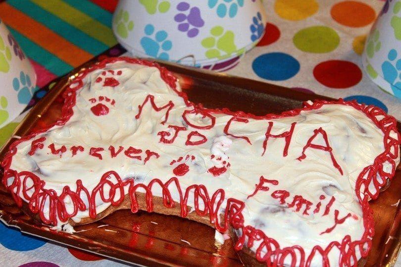 Aniversario de la torta del perro adopción