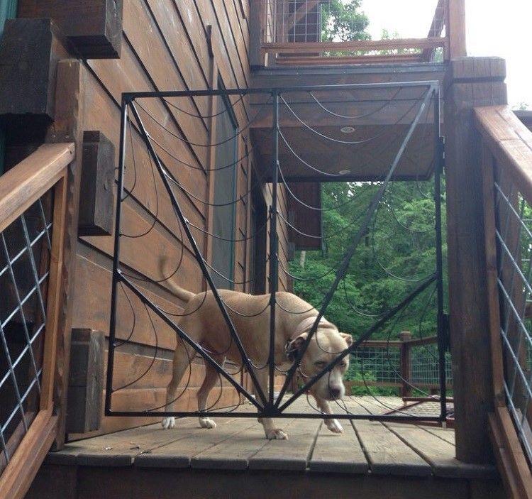 Perro detras de una puerta