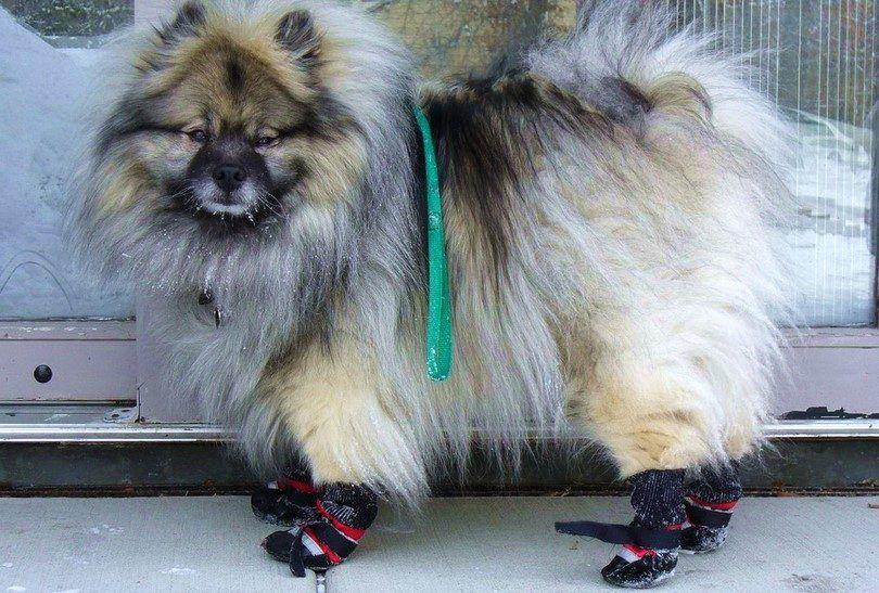 Como hacer botines perro: un proyecto de bricolaje diversión para las patas de buster