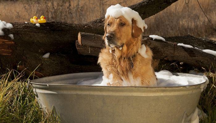 Cómo hacer champú para perros