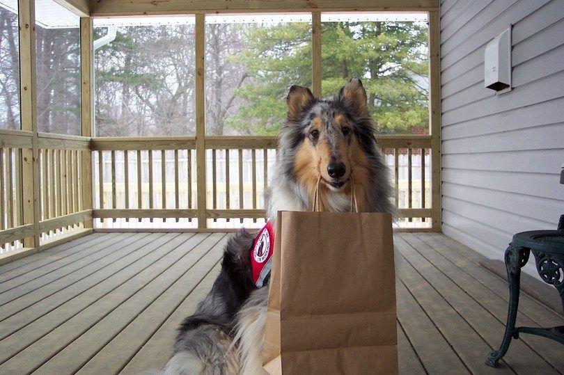 perro de servicio ayuda