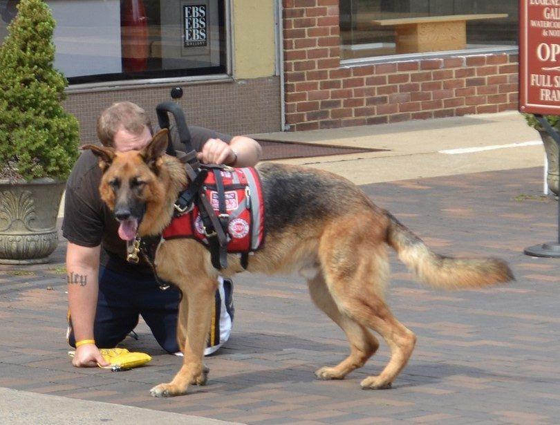Perro entrenado ayuda