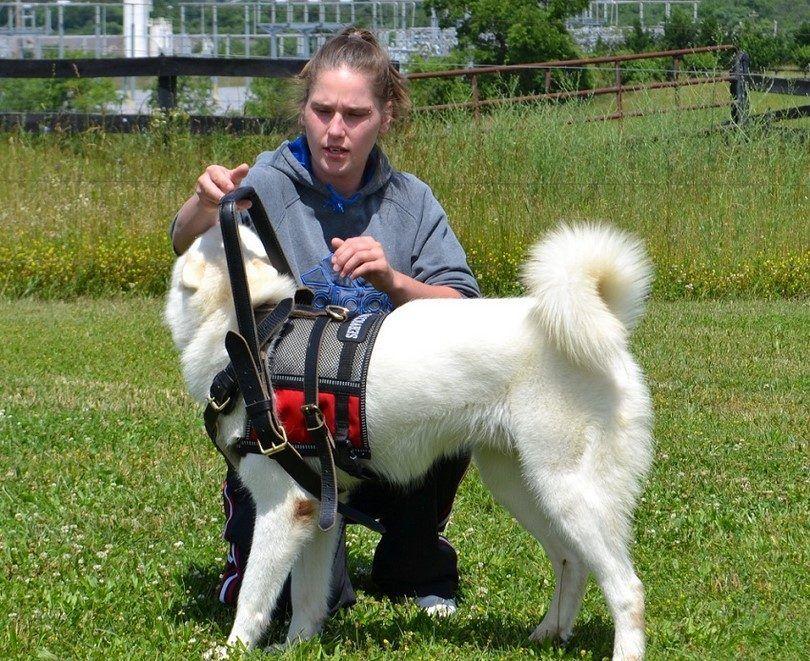 Entrenamiento a ser un perro de servicio