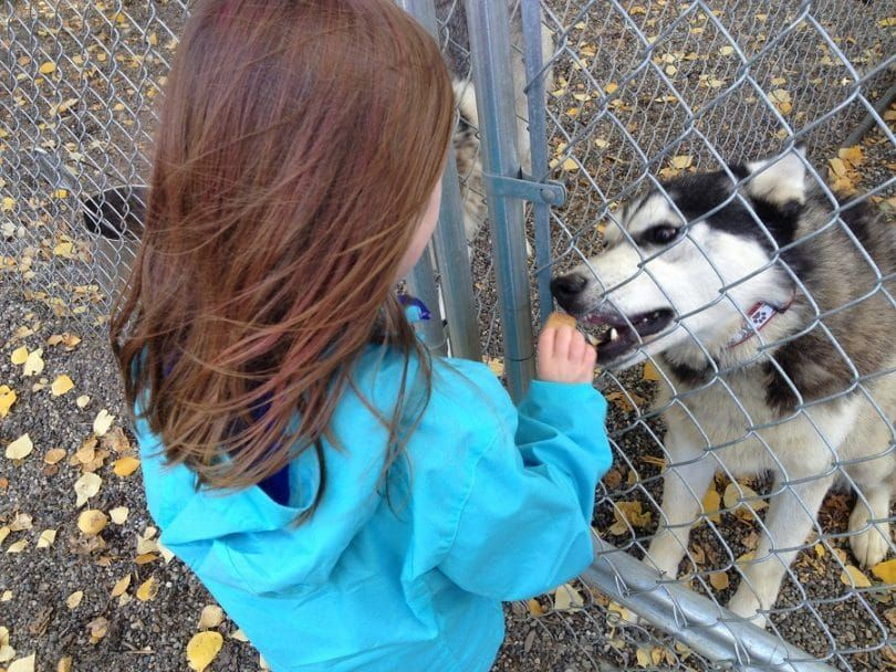 Superar el miedo de los perros