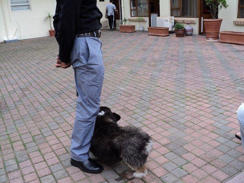 Tratar con el miedo de los perros