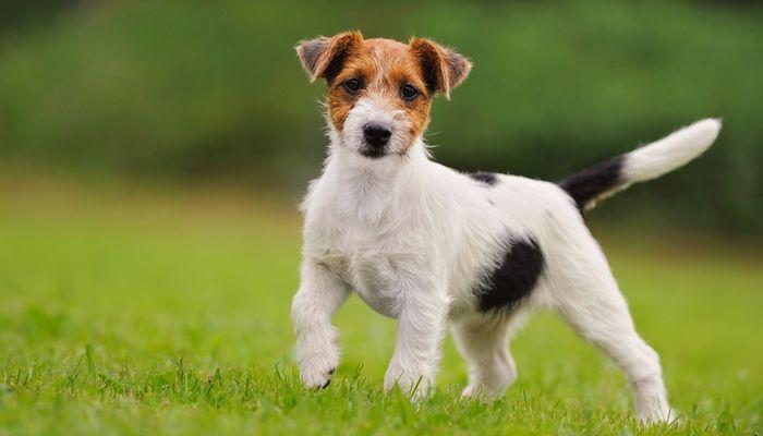 Cómo escoger el mejor perro