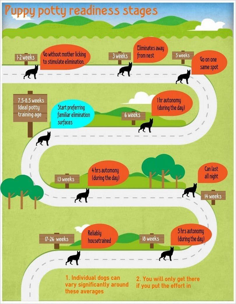 orinal cachorro etapas de infografía