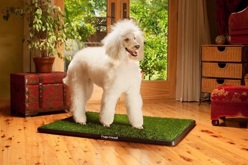 Dog Potty cachorro-Head portátil