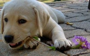 Cómo preparar a su perro para el verano