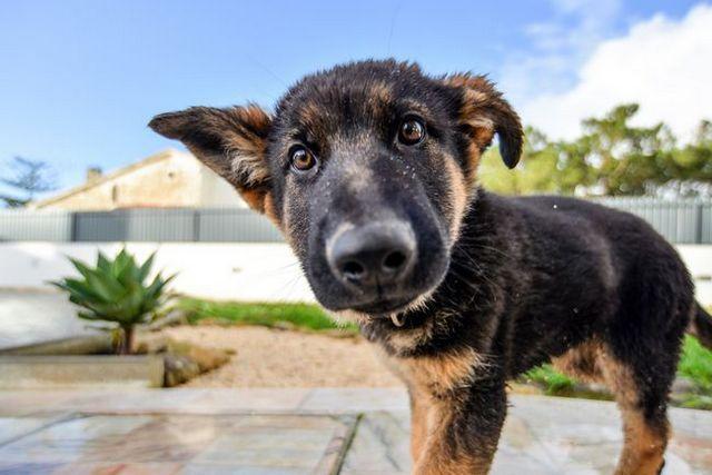 Cómo criar a un cachorro: la guía completa