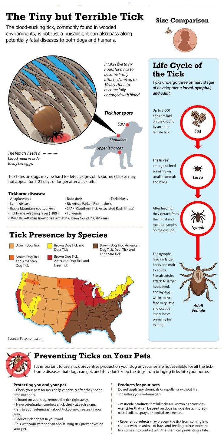 Pequeña pero terrible infografía garrapata