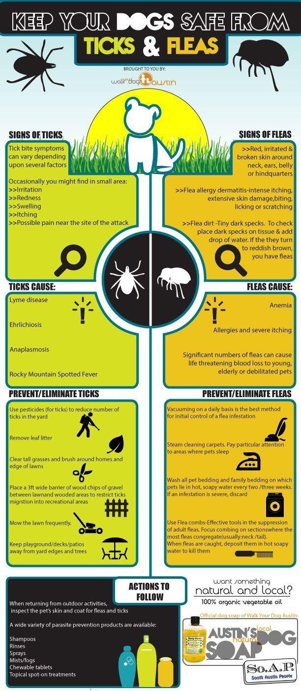 Mantenga a su perro a salvo de garrapatas y pulgas