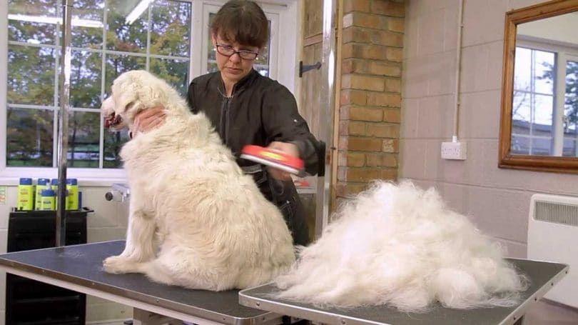 Preparación de su perro