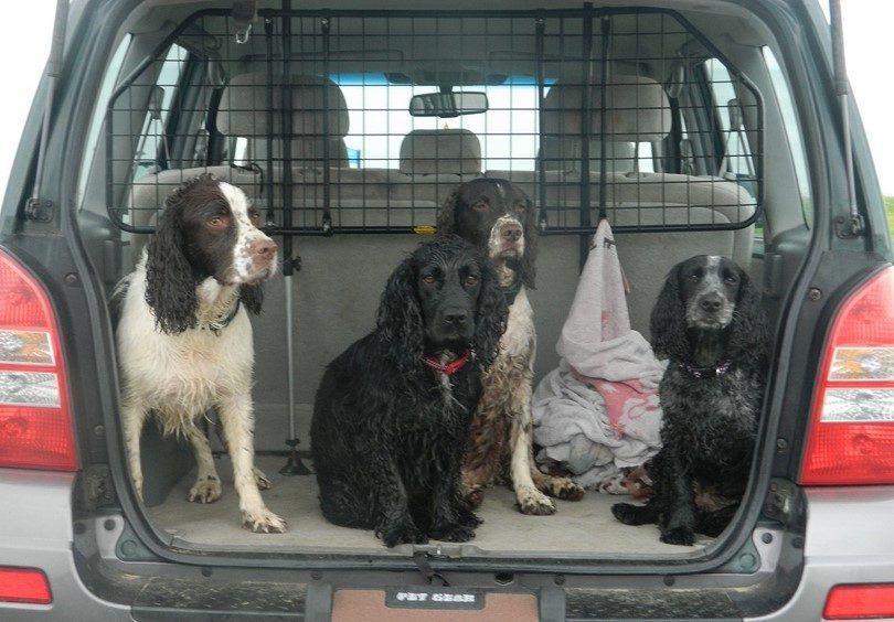 el transporte de perro